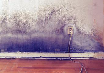 mold insurance 1
